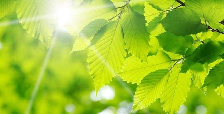 signification couleur vert
